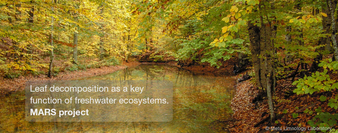 Leaf decomposition as a key function of freshwater ecosystems